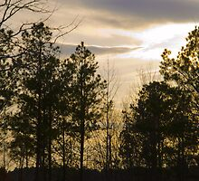 Friday Night Sunset at Cary in March by DBGuinn