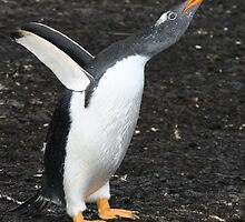 Gentoo Penguin - Something to Say! by Laurel Talabere