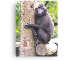 sad monkey man Canvas Print