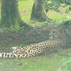 leopard on the evian  by cjdec