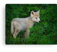 Young Pup  Canvas Print
