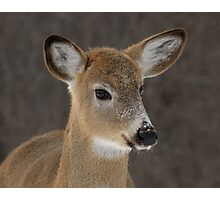 Doe Portrait Photographic Print