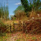 Just a Gate Somewhere  by hootonles