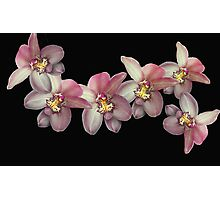 Flying Orchids Photographic Print