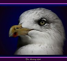 The Herring Gull (2) by snapdecisions