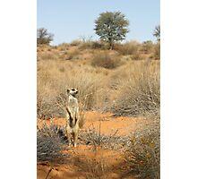 Moomins territory Photographic Print