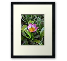 Tiny Tulip Framed Print