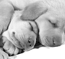 Sweet dreams by Princess1222