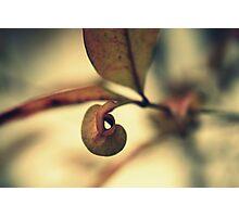 unfurl Photographic Print