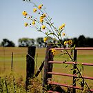 something beautiful getting past the gate (Dedicated to Stacey) by Matthew Reed