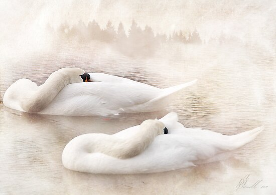 Two Swans by Svetlana Sewell