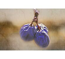 Blue Berries Photographic Print