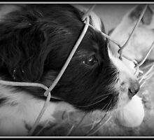 Black and White Border Collie by LisaMarie Miranda
