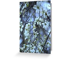 Dogwood ~ Florida, March 5th Greeting Card