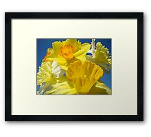 Spring Bright Yellow Daffodil Flowers Photograhy Baslee Troutman Framed Print