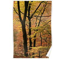 Autumn in Silent Valley Poster