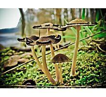 Fungilicious Photographic Print