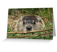 Peek a Boo I see you 2 Greeting Card