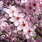 Spring Pink Tree Blossoms Colorful Floral art Baslee Troutman by BasleeArtPrints