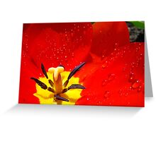 Red Tulip Flower macro Spring Raindrops wet Baslee Troutman Greeting Card