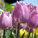 Floral Spring Lavender Tulip Flowers Garden Baslee Troutman by BasleeArtPrints