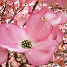 Tree Flowers Pink Dogwood Blossoms Spring Baslee Troutman by BasleeArtPrints