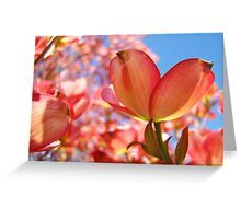 Sunlit Pink Dogwood Tree Flowers Spring Baslee Troutman Greeting Card