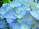 Blue Hydrangea Flower Garden Floral art Baslee Troutman by BasleeArtPrints