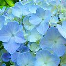 Blue Hydrangea Flower Garden Floral art Baslee Troutman by BasleeArtPrints