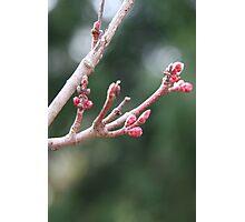 Tomorrow - Maple Photographic Print