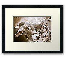 Hunchback Cows Framed Print
