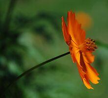 Orange by Catherine Davis