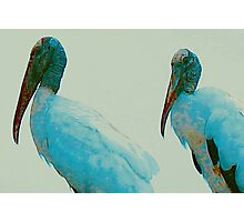 Wood storks on a rooftop Photographic Print