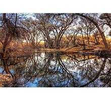 Tree Frames Photographic Print