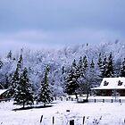 A Rural Winter by Diane Blastorah