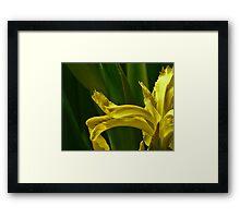 Jap iris art Framed Print
