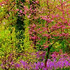 Spring Splash by NatureGreeting Cards ©ccwri