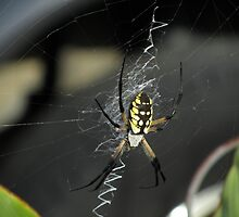 Itsy Bitsy Spider by Jaclyn Hughes