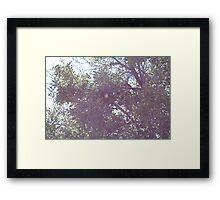 No partridge Framed Print