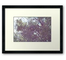 No partridge Framed Print