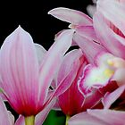 Pink Orchids by Kathleen Struckle