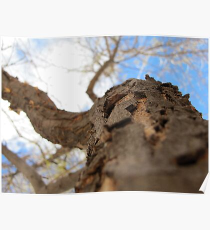 Tree Trunk Looking at Sky Poster