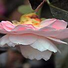 Karma Camellia by SuddenJim
