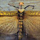 Hocus Locust by SuddenJim