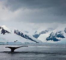 Whale Tail Antarctica by Robert van Koesveld