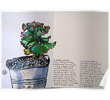 Bucculent Poster