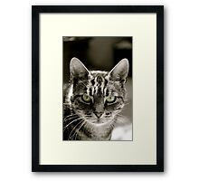 Steven the cat Framed Print