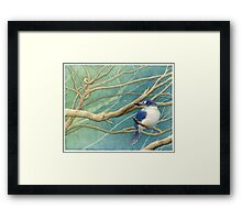 Forest kingfisher (Todiramphus macleayii) Framed Print