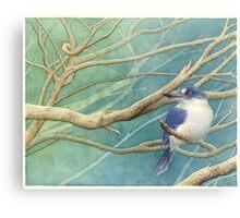 Forest kingfisher (Todiramphus macleayii) Metal Print