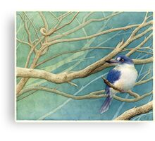 Forest kingfisher (Todiramphus macleayii) Canvas Print